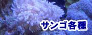 サンゴ各種